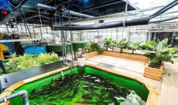 AASU Online Courses Aquaponic – the circular food production system for Armstrong Atlantic State University Students in Savannah, GA