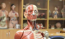 National University Online Courses Human Anatomy for National University Students in San Diego, CA